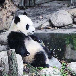 Jour 30 : on fête nos 1 mois de voyage comme il se doit, avec les PANDAS 🐼😍🇨🇳