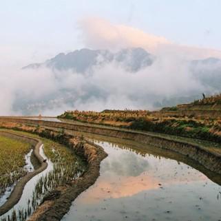 Jour 43 : balade(s) dans les rizières de Yuanyang 🌾🍚❤️
