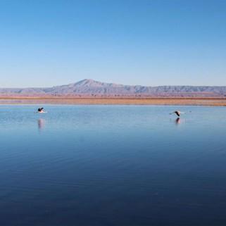 Jour 282 : La tournée des lagunes d'Atacama 💙