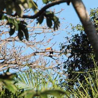 Jour 312 : Pantanal jour 1, balade pieds nus dans la boue du bush pour voir les animaux 👀🍃