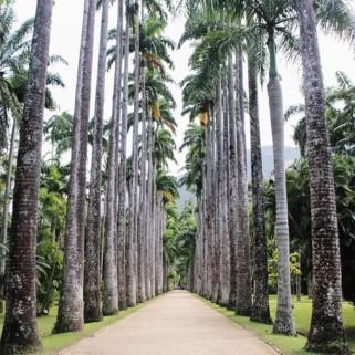 Jour 333 : Le jardin botanique de Rio 🌴🌴